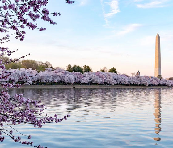 Celebrate Peak Bloom With Ten Fun Facts About Cherry Blossoms